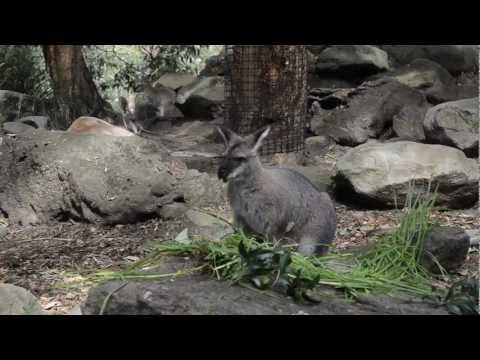 What To See And Do At Taronga Zoo In Sydney, Australia