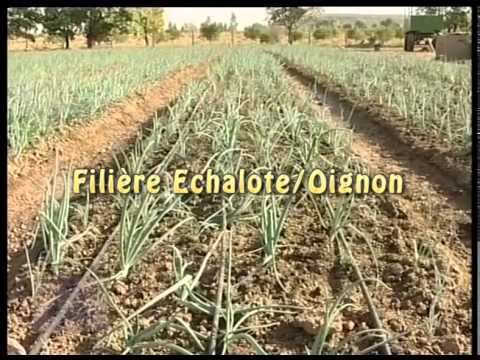 Magazine  PCDA-Forum des investisseurs des filières agricoles au Mali