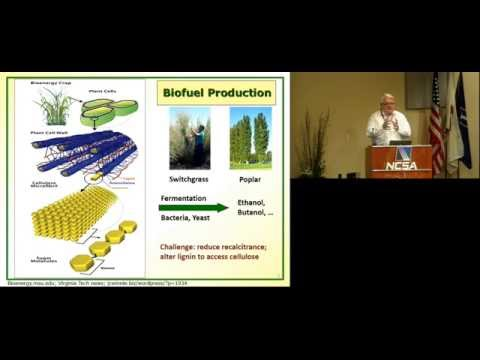 """Computational Systems Analysis of Lignin Biosynthesis""– Eberhard Voit at Psi Symposium"