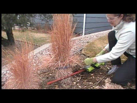 When To Cut Ornamental Grasses The best way to prune ornamental grasses youtube the best way to prune ornamental grasses workwithnaturefo