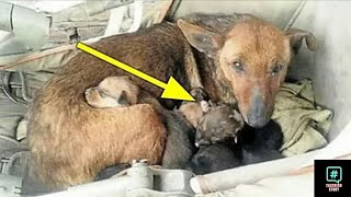 she-found-a-street-dog-with-6-puppies-then-saw-the-baby-s-hand-among-them