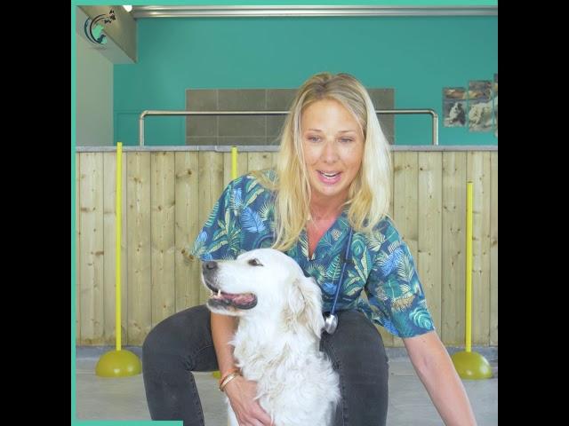 L'interview clinique d'Amélie   Clinique vétérinaire Saint Roch