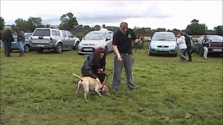 Belfast K9 Demonstration Of Bite Work And Obedience