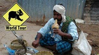 Inde │Voyage Tour Du Monde ► Une flute un serpent et *** HD
