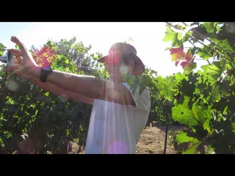 Kibbutz Ortal Vineyard, Golan Heights, Israel. Tour Guide: Z