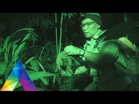 73+ Gambar Upin Ipin Hantu Durian Paling Hist