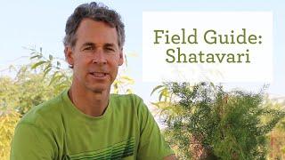 The Healing Benefits of the Ayurvedic Herb Shatavari thumbnail