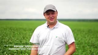 Биоинокулянт Ризолайн в технологии выращивания сои