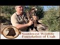 Golden Eagle Hit by Wind Turbine Released back to the Wild!