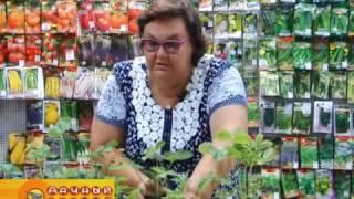 Крупноплодная садовая земляника (часть 1)