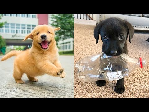 Baby Dogs - Cute and Funny Dog Videos Compilation #30 | Aww Animals
