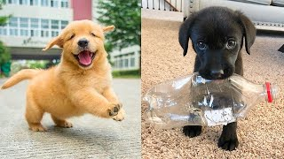 Baby Dogs - Cute And Funny Dog Videos Compilation #30   Aww Animals