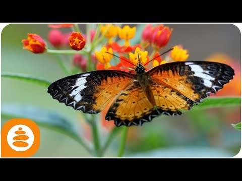 Native american Flute, Piano, Relaxing music, Spring, 4k - 0011