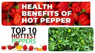 Health Benefits Of Hot Pepper And Top 10 Hottest Peppers. Video #52. @Ngu Tran USA