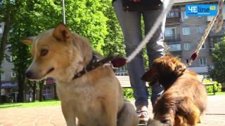 Зооволонтеры посчитали бесхозных собак Чернигова – их количество шокировало