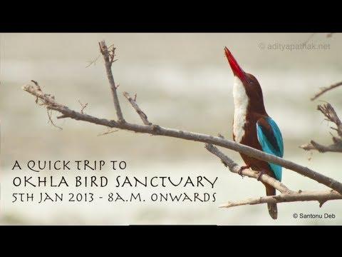 Okhla Bird Sanctuary - a quick trip