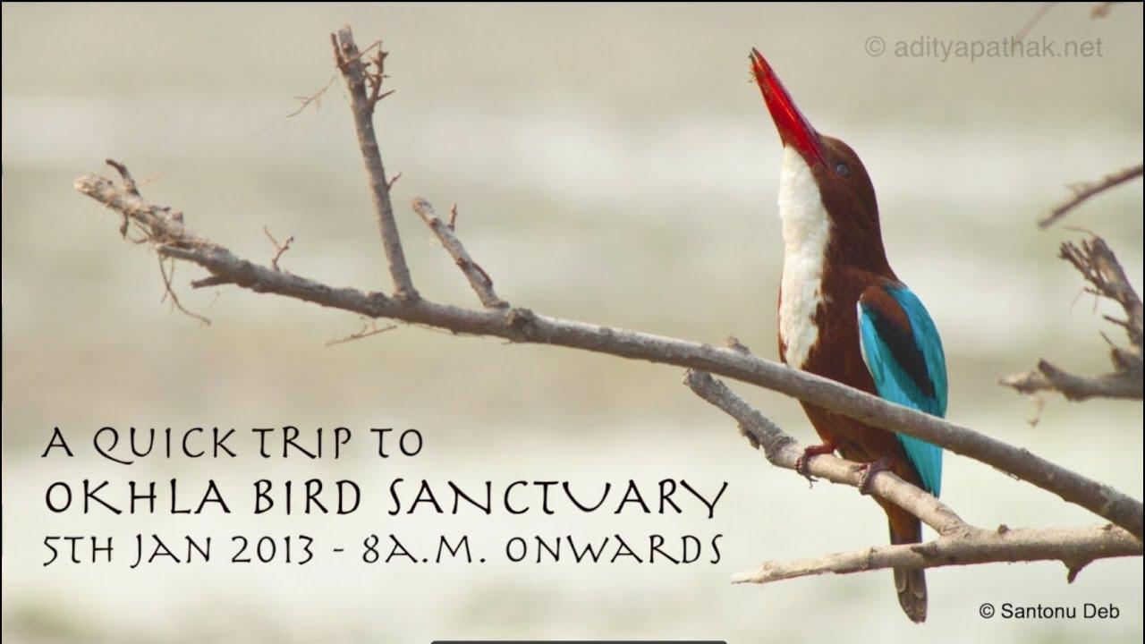how to make a bird sanctuary model