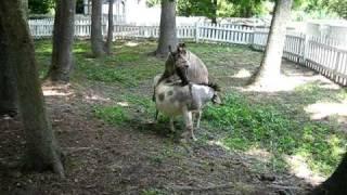 Funny Donkeys 2