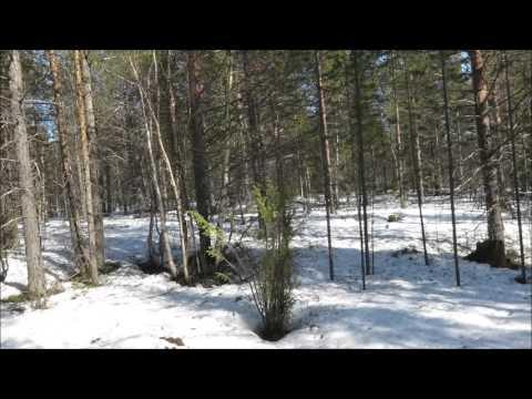 Видео Фото охота под юбки