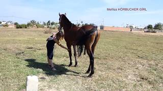 WOW! Cute Japan Student Training Black Horse Care a Basic And Learning For Beginners Near Small Farm