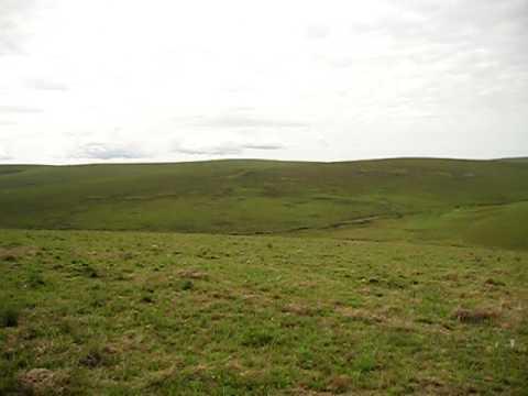 Malawi - Nyika Plateau - the evergreen hills