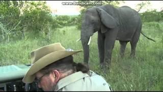 Afryka Safari Słonie