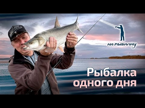 рыбалка на спиннинг щука окунь жерех видео