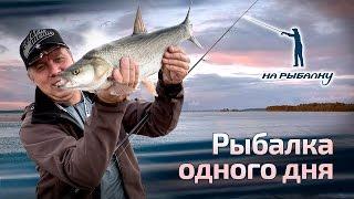 Щука, окунь, судак и жерех на спиннинг. Рыбалка одного дня : НР #6