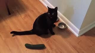 Приколы 2017 лучшие испуги котов смешные видео