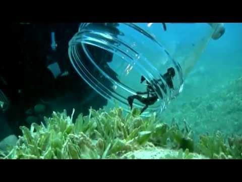 סוסוני ים המצפה התת ימי באילת