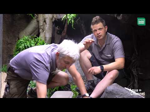 Aquascaping im Tierpark Hagenbeck | DENNERLE
