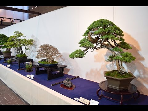 Japan Bonsai Tour | 2018