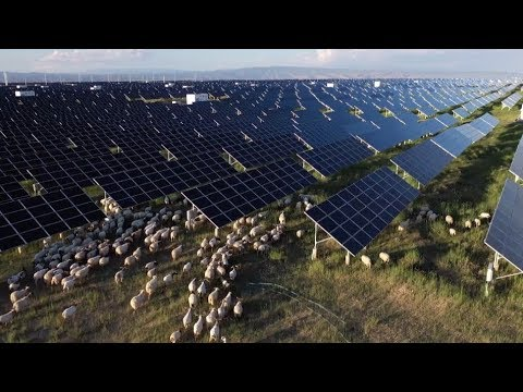 China's Largest Solar Farm Makes Breakthrough in New Energy Development