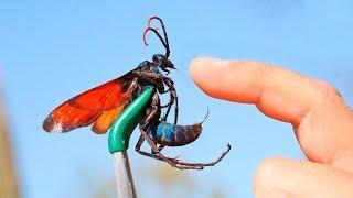 세계에서 가장 위험한 벌레 10가지