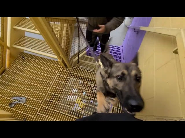 Available Police Dogs: K9 Halo environmentals