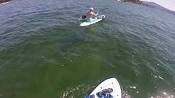 Paddleboarding Coeur d'Alene Lake.