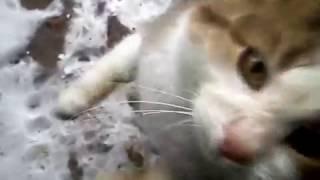 Cat stole the mobile phone.Кот украл мобильный телефон.