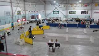 Carleton County,NB Flyball 2019