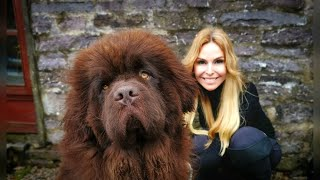 THE NEWFOUNDLAND DOG  WORLD'S MOST POWERFUL WATER DOG