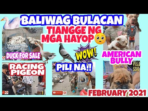 PETS AND ANIMALS FOR SALE IN BALIWAG BULACAN PHILIPPINES 02-10-21.vlog#146