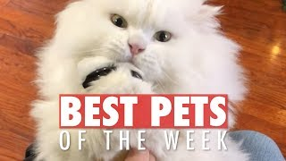 Best Pets of the Week | February Week 1 2018