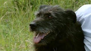 Ищу друга - Котенок Тиша и Собака Тарина - Домашние любимцы - С добрым утром, малыши!