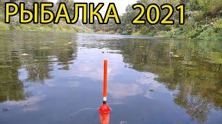 Эти рыбы гнут удочку Рыбалка в конце августа 2021
