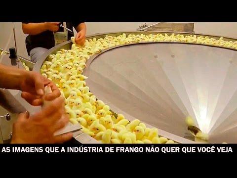 As imagens que a indústria de frango não quer que você veja
