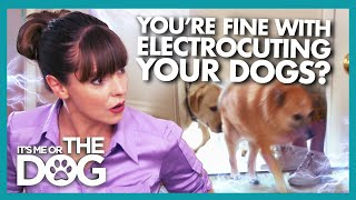Dogs Scared to Enter Their Own Home Due to Electric doormat | It's Me or the Dog