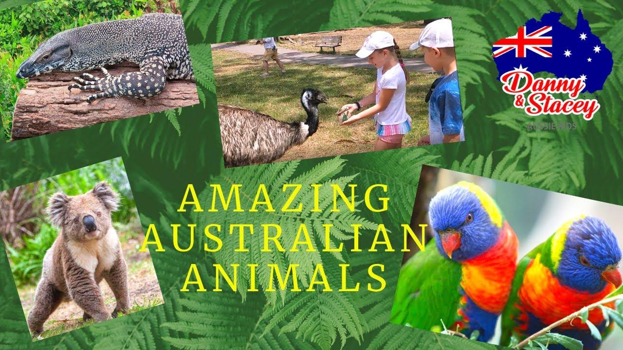 Amazing Australian animals (Cleland Wildlife Park)\ Удивительные животные Австралии