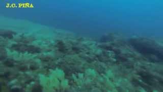 Pescasubmarina del dentón dentex dentex en el litoral Murciano Aguileño
