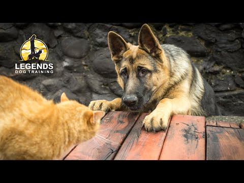 dog-and-cat-socialization:-training-for-hyper-excited-dogs