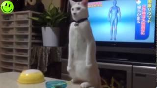 cute cats and dogs doing funny things compilation 2015 new hd   the internet haz cats and dogs