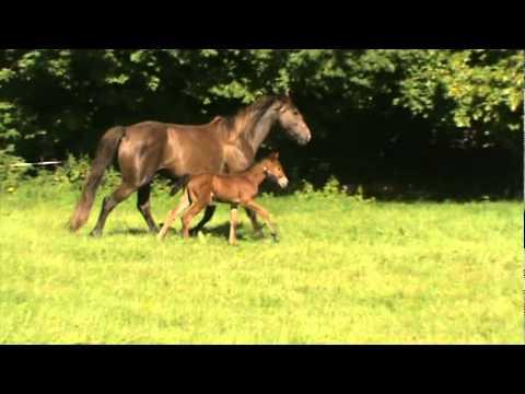 Heathermore lux roxy foal